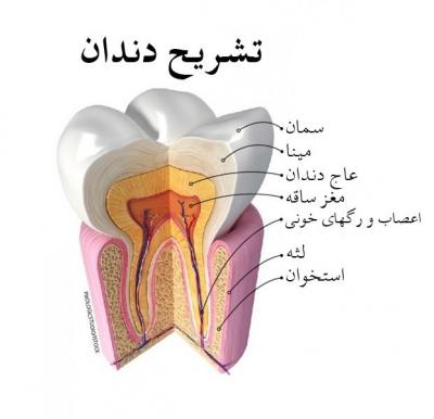 عاج دندان